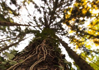 tree - center - baum - efeu