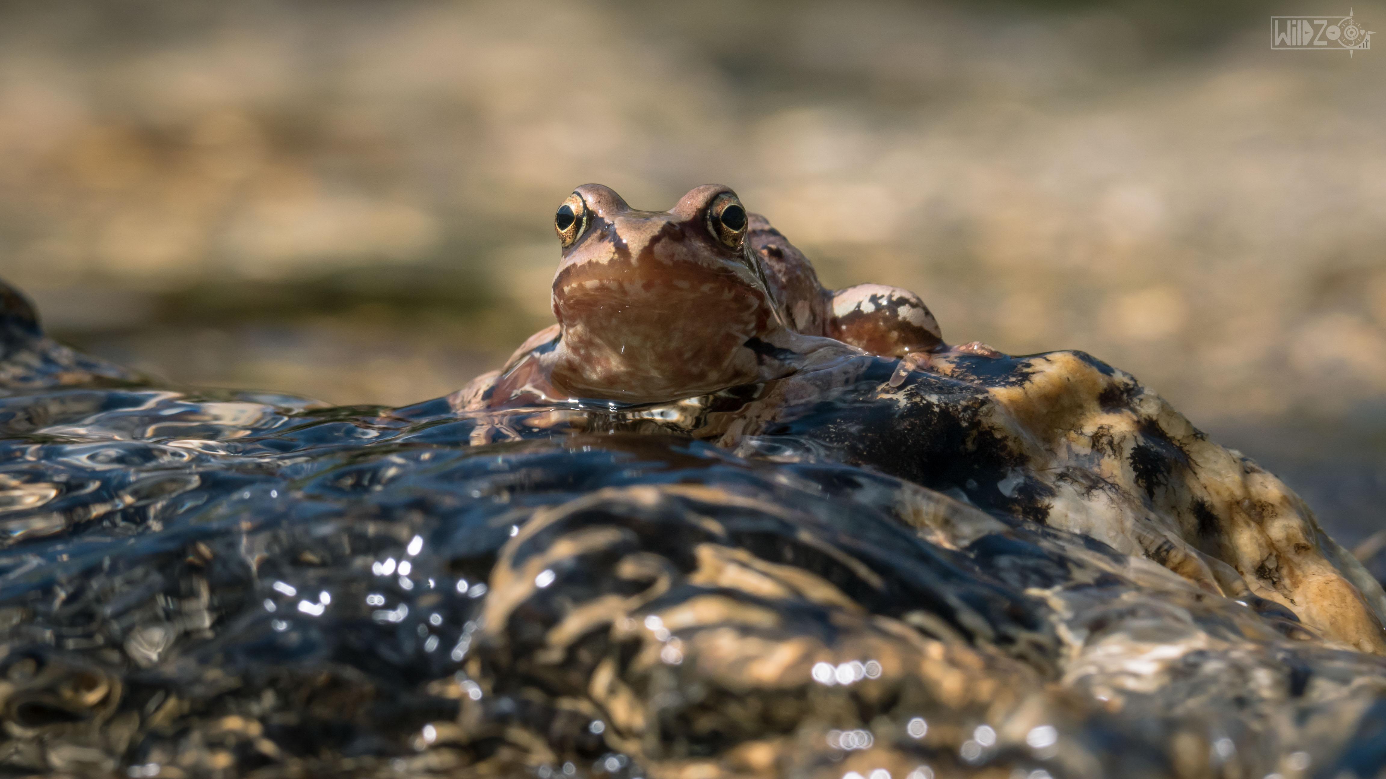 animals-photography-wildzoo