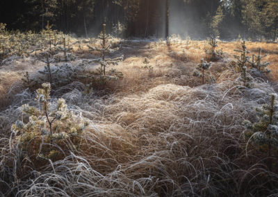 frozen, grass, morning
