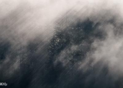 Sunrays - Fog - Forest - Trees - Sunlight - mystic
