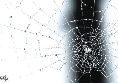 Spider - spiderwebb - morning dew - dew - beautiful - nature