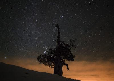 nightsky - stars - old tree - dolomites - dolomiten - south tyrol