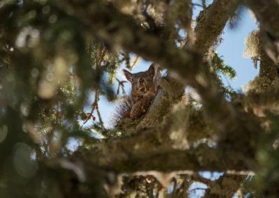 Squirrel - eating - misuruna - autumn - monte piana -
