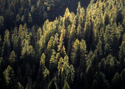autumn - landro - dolomites - trees - sunlight