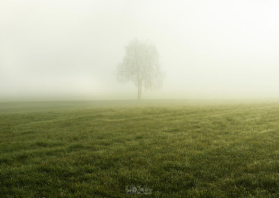 A tree in the morningfog / St. Georgen (IT) / Daniel Tschurtschenthaler