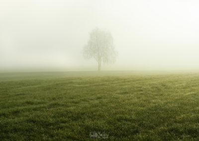 A tree in the morningfog / St. Georgen (IT) / Daniel Tschurtschenthaler