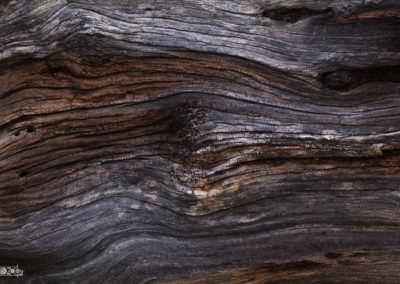Wood - Structures - Tree - Old - Forest - Nature - Naturephotography