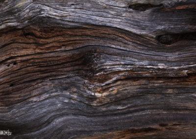 Wood structure / Lukas Schäfer