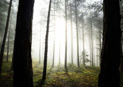 forest - wald - fog - nebel - trees - sunlight - South tyrol