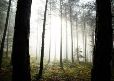 Foggy forest with sunlight breaking through / Amaten (ITA) / Lukas Schäfer