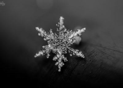 snow - snowflake - water - seis - seiser alm