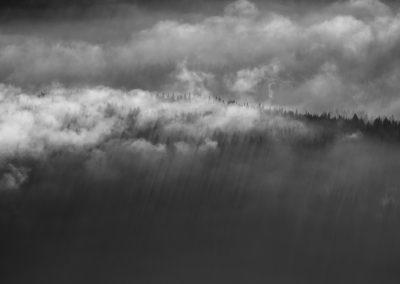 A foggy forest / Sexten (IT) / Daniel Tschurtschnethaler