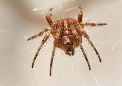 Little spider / Bozen (BZ) / Daniel Tschurtschenthaler