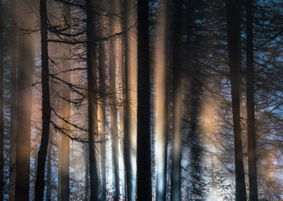 Illuminated trees / Daniel Tschurtschenthaler