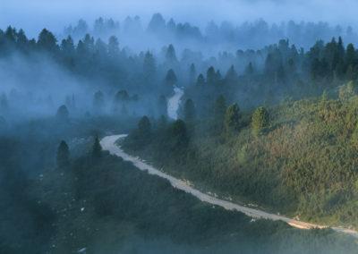 The way into the fog forest / Sennes (IT) / Daniel Tschurtschenthale