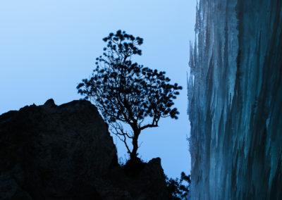 upside down gravity - tree - eis - frozen waterfall