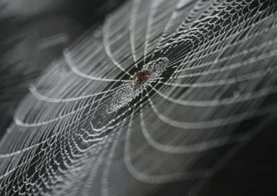 A spider sits on his own constructed plate and waits for his meal / Tofino (BC) / Daniel Tschurtschenthaler