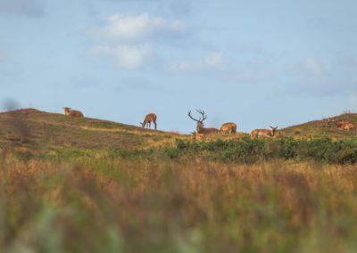 A deer and his girls / Denmark / Lukas Schäfer